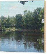 Ducks On The River Wood Print