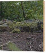 Duckweed Camouflage Wood Print