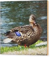 Ducky Day  Wood Print