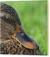 Ducky Up Close And Personal Wood Print