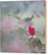 Duel Toned Ethereal Rose Bud Wood Print