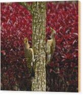 Dueling Woodpeckers Wood Print