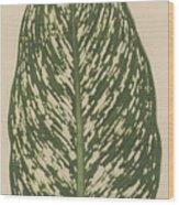 Dumbcane Wood Print
