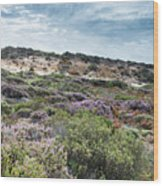 Dune Plants As Erica And Beautiful Sky Wood Print
