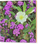 Dune Primrose Oenothera Deltoides And Purple Sand Verbena Wood Print