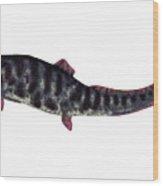 Dunkleosteus Devonian Fish Wood Print