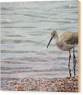 Dunlin And The Green Sea Wood Print