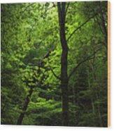 Dunlop Hollow Wood Print