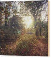 Dunmore Wood - Autumnal Morning Wood Print