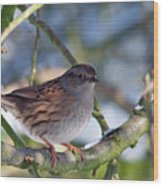 Dunnock On A Snowy Day In Winter Wood Print