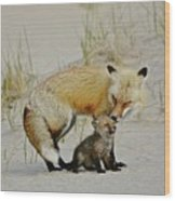 Dunr Fox Father And Child Wood Print