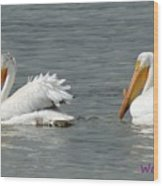 Duo Pelicans Wood Print