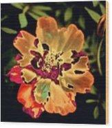 Durango Outback Mix 02 - Photopower 3200 Wood Print