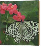 Durham Butterfly #5 Wood Print