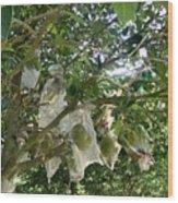 Durian Tree Hong Kong Wood Print
