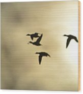 Dusk Flight Home Wood Print