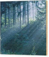 Dusk In Ashenvale II Wood Print