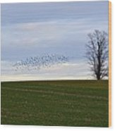 Dusk Tree And Birds Wood Print
