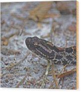 Dusky Pygmy Rattlesnake Wood Print