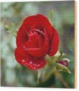 Dusky Red Wood Print