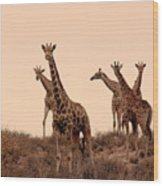 Dusty Giraffes Wood Print