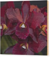 Dusty Red Orchid Wood Print