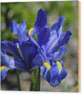 Dutch Iris Wood Print
