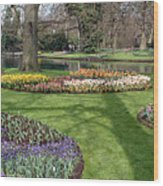 Dutch Tulip Gardens Wood Print
