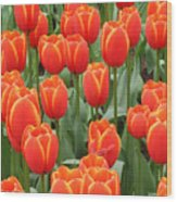 Dutch Tulips Wood Print
