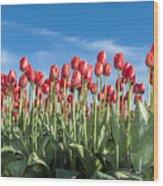 Dutch Tulips Second Shoot Of 2015 Part 10 Wood Print