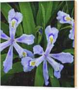 Dwarf Crested Iris Wood Print