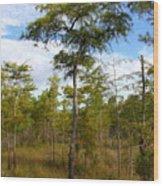 Dwarf Cypress Tree Wood Print