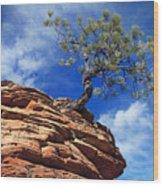 Dwarf Pine And Sandstone Zion Utah Wood Print