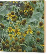 Dying Sun Flowers Wood Print