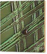 E. Coli In Culture Dish, Macro Image Wood Print