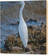 Eager Egret Wood Print