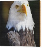 Eagle 14 Wood Print