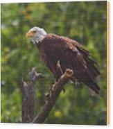 Eagle-2 Wood Print