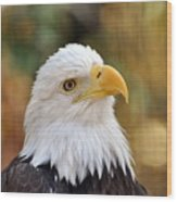 Eagle 9 Wood Print