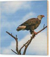 Eagle And Blue Sky Wood Print