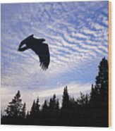 Eagle At Dawn Wood Print