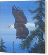 Eagle At Treetop Level Wood Print