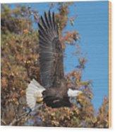 Eagle Banking Wood Print