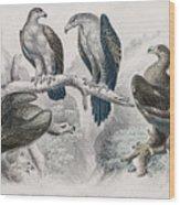 Eagle Birds Print Wood Print