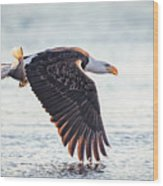 Eagle Catch Wood Print