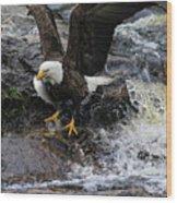 Eagle Catches Fish Wood Print