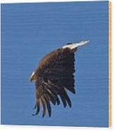 Eagle Dive Wood Print