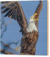 Eagle Excitement Wood Print
