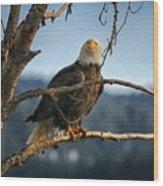 Eagle Eyed Wood Print