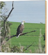 Bald Eagle Overlook Wood Print